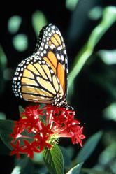 community_migrate_monarch