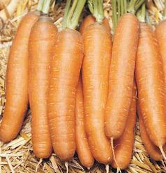 bolero_carrots