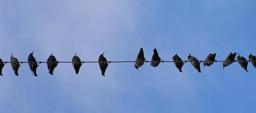 group-blogging-birds